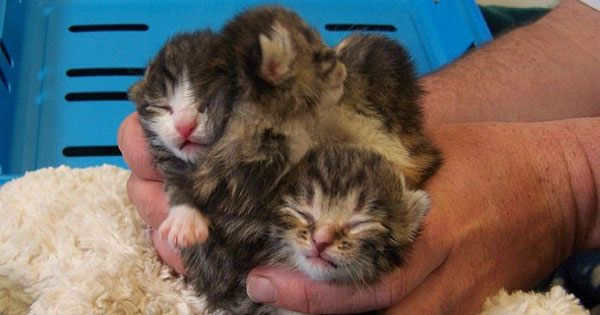 Kittens Dumped In Bin Bag