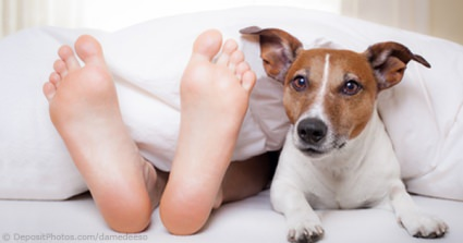 "It's A ""Dog's Life"" For Partners As 10% Are Banished From Their Beds To Make Room For A Pet"