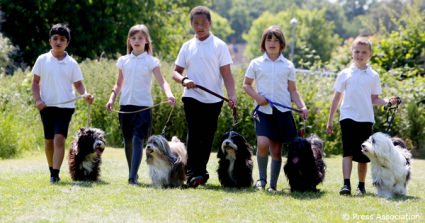 UK's First School Resource To Tackle Dog Bite Incidents Involving Children Launched