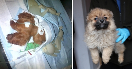 Jail Sentences For Gang Selling Sick Puppies To Broken-Hearted Families