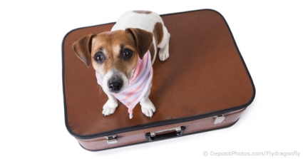 Could Dogs Be The Boost British Tourism Needs?