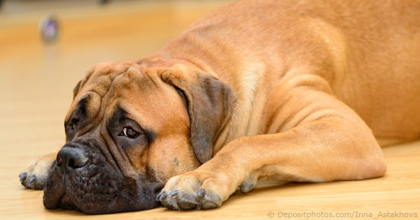 Dog Illnesses & Diseases
