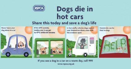 RSPCA Warns Dog Owners To Take Care of Dogs As Temperatures Soar