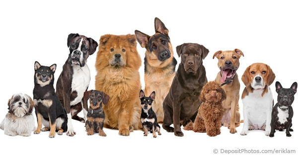 Dog breeds for Different types of puppies breeds