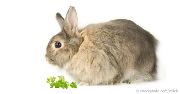 how to check if a rabbit is safe to eat