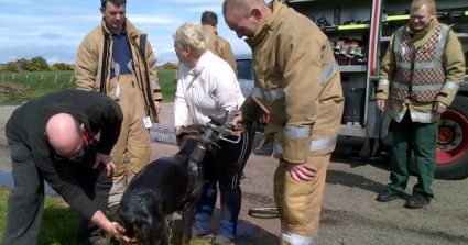 Pregnant Dog Rescued From Well