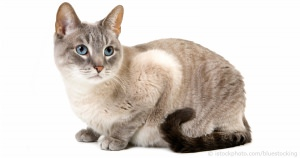Scientific Classification Of Pet Cats