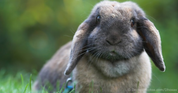 Vital Signs And Biological Facts About The Pet Rabbit