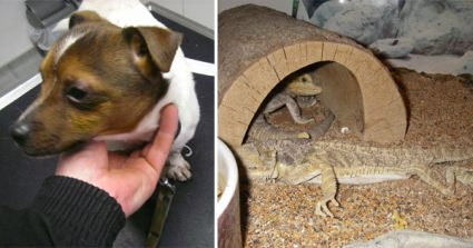 Derbyshire Couple Left Pet Reptiles, Dog And Cat To Starve While They Stayed With Friends Just Half A Mile Away