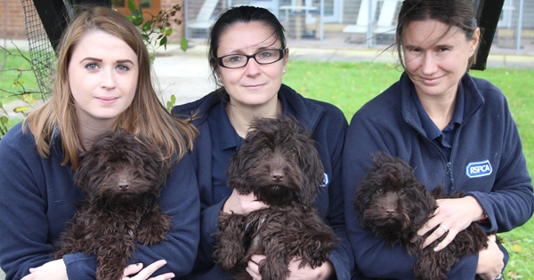 RSPCA Sees Worrying Rise In Rescues Of Fashionable 'Designer' Dog Breeds
