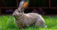 Pet Rabbit Behaviour
