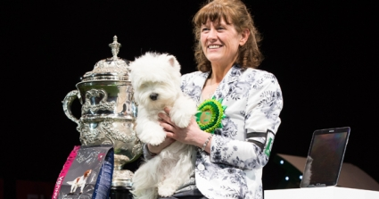 Devon, A West Highland White, Is Best In Show Champion At Crufts 2016