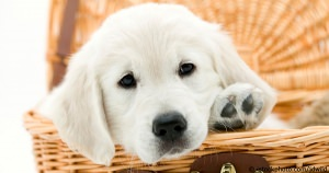 Places To Buy A Dog Or Puppy