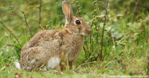 Rabbit Meat For Dogs Uk